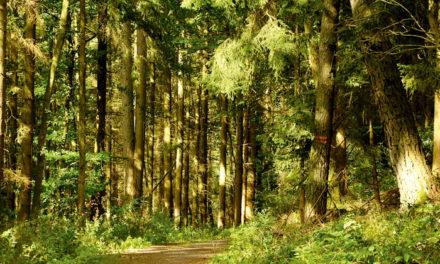 La FUE crea un equipo multidisciplinar para pensar en cómo proteger los bosques