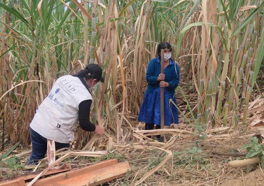 La Fundación SENER, ICLI y FIAD colaboran para fortalecer la cadena socio-productiva del azúcar de caña en la sierra de Piura (Perú)