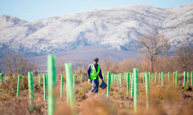 Fundación Repsol, Sylvestris y Land Life Company desarrollarán proyectos conjuntos de reforestación en la Península Ibérica y Latinoamérica