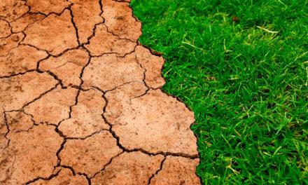 Empleados de Roche implicados en la lucha contra el cambio climático
